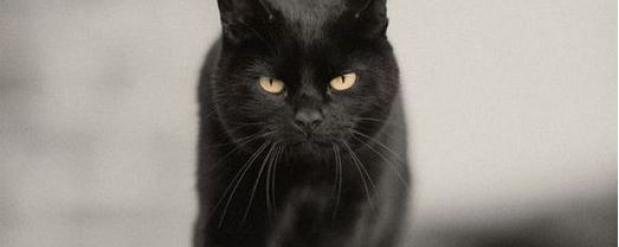На кастинг в Москве приглашают черных котов