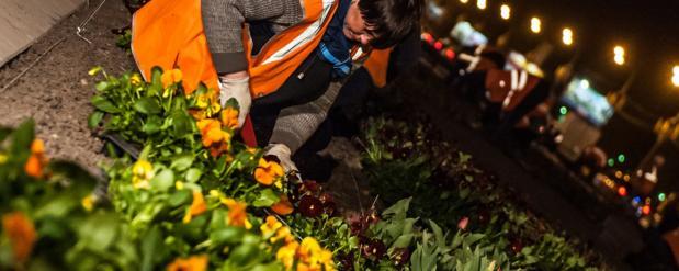 Улицы Москвы украсят миллионы живых цветов