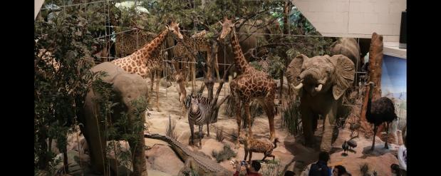 Дарвинский музей ждет своих посетителей